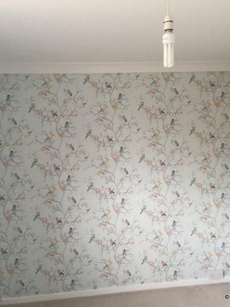Various Wallpapers